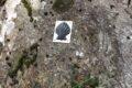 Muschel 05.02 ELavin, Plan da Plata. Felsen am linken Wegrand im Wald