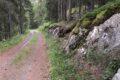 Muschel 05.02 TLavin, Plan da Plata. Felsen am linken Wegrand im Wald